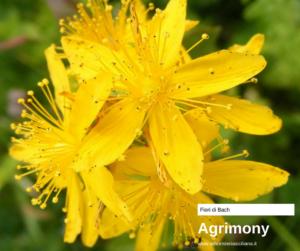 Agrimony Erboristeria siciliana, la tua erboristeria online