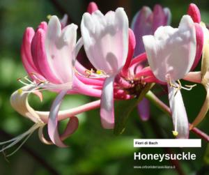 Honeysuckle Erboristeria siciliana, la tua erboristeria online