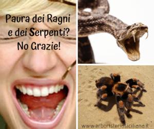 Paura dei Ragni e dei Serpenti? No Grazie! Erboristeria siciliana, la tua erboristeria online