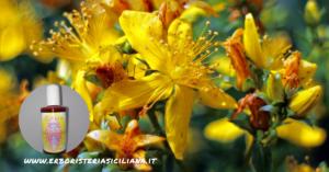 Oleolito di IPERICO Alch Erboristeria siciliana, la tua erboristeria online